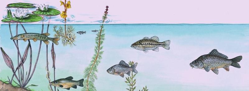 I pesci del Lago di Montepulciano